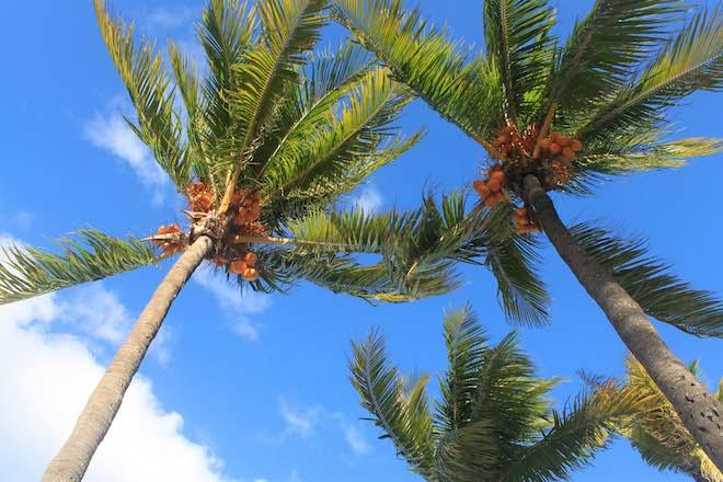 #05 March - Beach Breeze - Tara Demren