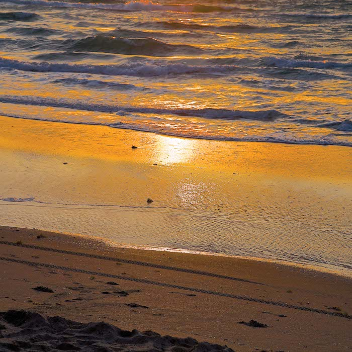 #11 September - Golden Sand - Sarah-Lydia Singer