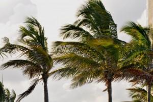 #03 Palm Tree Background b (1) adj