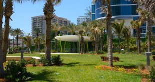 new lawn and trees at Samson Oceanfront Park.
