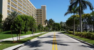 A row of freshly planted trees line a Sunny Isles Beach street.