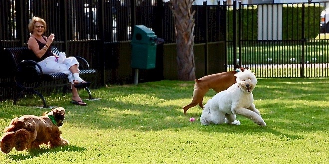 Dogs playing at open grassy dog park at Senator Gwen Margolis Park