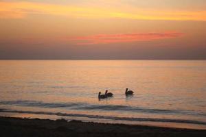 14-December-Pelicans-at-Rest-Beatrix-Csinger