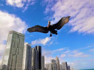 "Alex Vinokur ""Pelican Approach"""