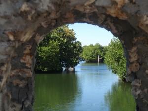 September - Mangroves Through the Coral by Sylvie Leidi